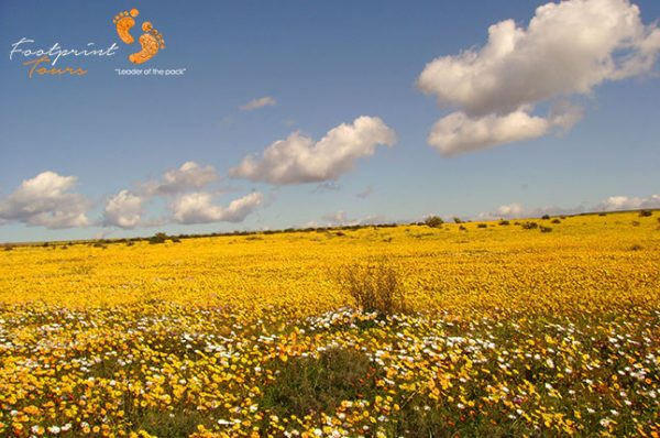 namaqua at its best – DSC00013r